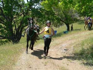 How to Trot Out Your Horse: the faster the better!